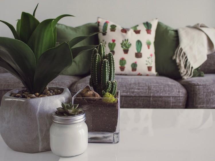 Dit zijn de beste planten voor elke kamer van je huis goed gevoel