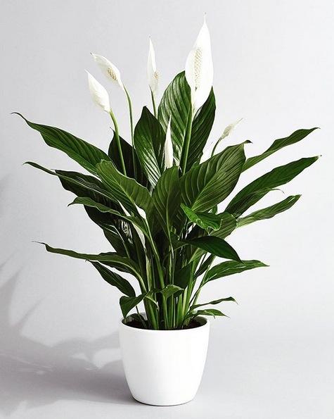 Voorkeur 5 x kamerplanten die wonderen doen voor je gezondheid | Goed Gevoel @CB64
