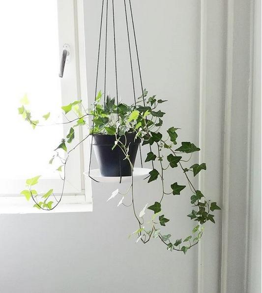 Populair 5 x kamerplanten die wonderen doen voor je gezondheid | Goed Gevoel #UM93
